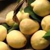 Limoni Primofiore Bio Agricola Giardina