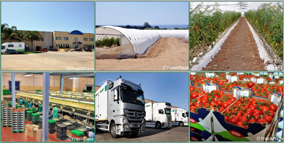 Fresh-plaza-azienda-agricola-giardina