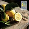 Limoni Primofiore Agricola Giardina