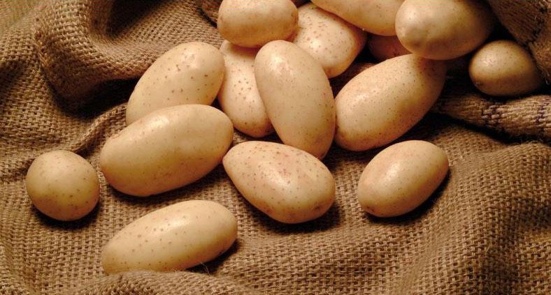 patata-novella-ortaggi-agricola-giardina-siracusa-compra-acquista