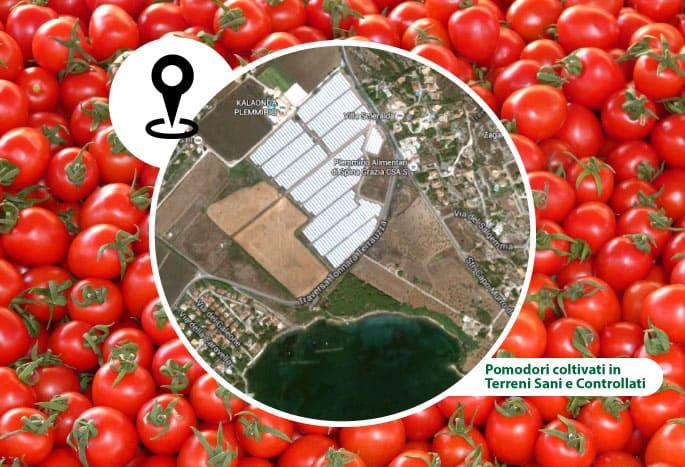 pomodori agricola giardina